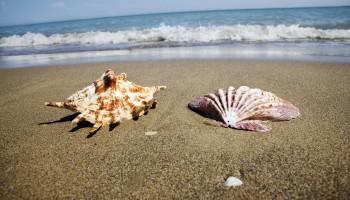 Eine Muschel liegt am Sandstrand neben dem Meer. Schöne Erinnerung an den letzten Urlaub.