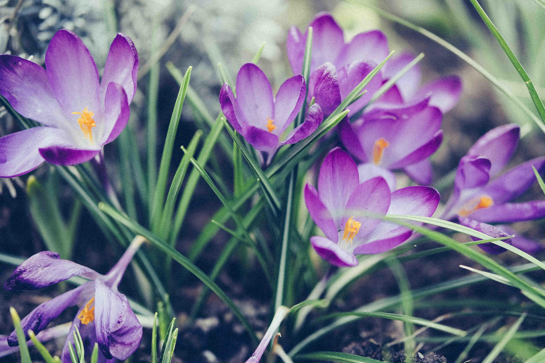 Frühling-Website-2-2